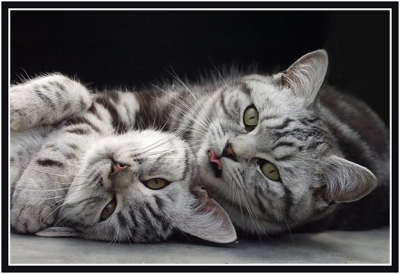 Για αλλεργία των ανθρώπων στις γάτες