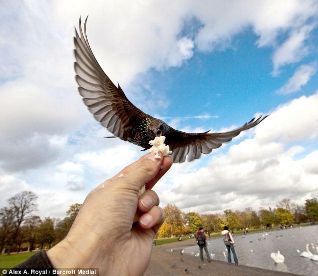 μεγάλο μαύρο πουλί vedio Milf φωτογραφίες ποδιών